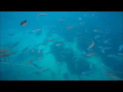 Fisk i Krotien