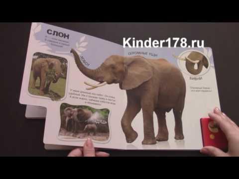 слона картинки