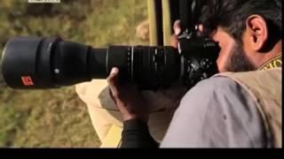 Wildlife Photography Masterclass 2017 in Kenya thumbnail