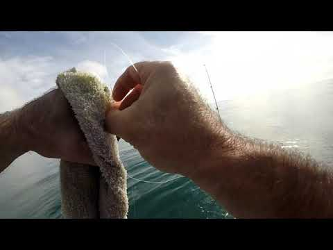 Gurnard Fishing with Jimmys Bait Co
