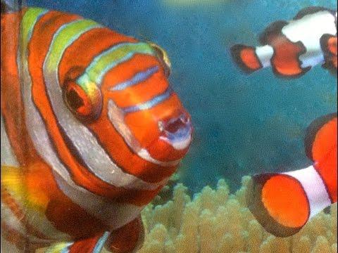 Самые красивые рыбы  в мире. Animals & fish.