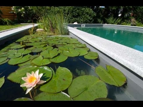 Enjoying Your Garden This Summer Natural Swimming Pools Ideas Youtube