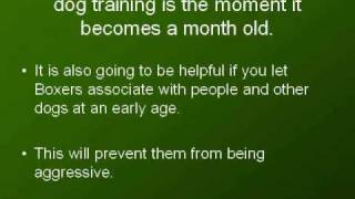 Boxer Dog Training - Quick Tips You Can Use To Train Your Boxer
