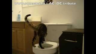 Duder the Bengal cat pees on the toilet then flushes