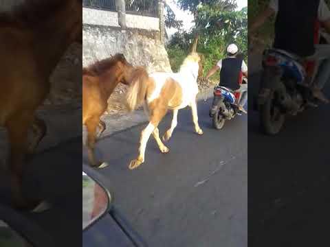 Kuda liar