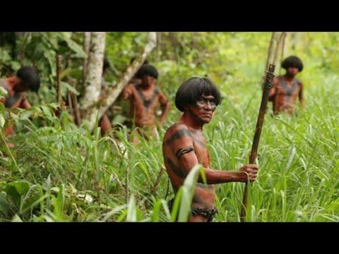 world biggest Amazon Jungle   Amazon Rainforest    Bengali  /amazon forest bangla/আমাজন ফরেস্ট।।