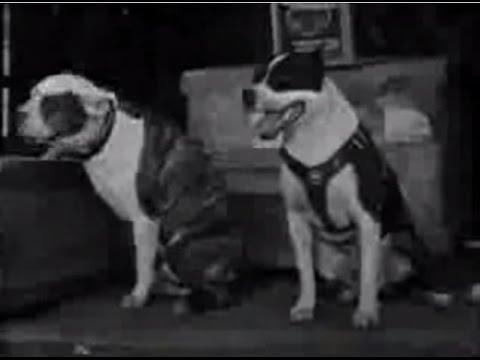 Pit Bull - Brigas de Cães - Documentário Animal Planet (dublado)