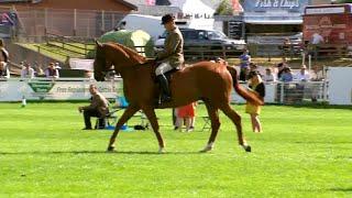 Helwyr 4 oed ysgafn | Hunters lightweight