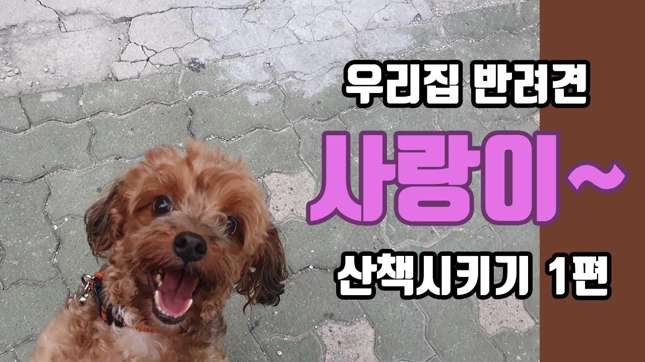 우리집 사랑이~ 반려견(강아지) 산책 시키기 1편