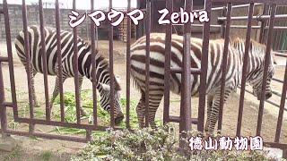 シマウマ シリーズ Zebra series https://www.youtube.com/watch?v=9Qib...