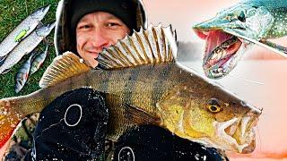 Рыбалка на Окуня Кольский полуостров Трое суток на льду