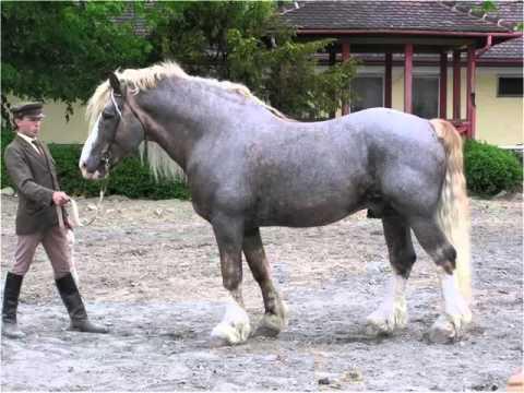 Picture Ideas Of Horses | Belgian Horse