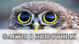 Удивительные факты о животных(Понравилось видео? Нажми - https://goo.gl/hP9iVw Группа вконтакте: https://goo.gl/gBZAKx Наш instagram: https://goo.gl/K1jnBd Подписывайтесь,..., 2015-12-11T12:59:13.000Z)