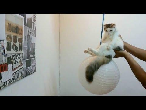 Miley's Favorite Cat Video on Ellen show