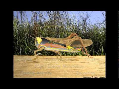 Insect External and Internal Structures and Functions