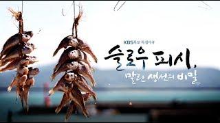 [다큐] 슬로우피쉬, 말린생선의 비밀 by KBS목포