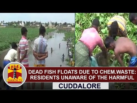 Dead Fish Floats due to Chemical Waste, Residents Unaware of the Harmful  | Thanthi TV