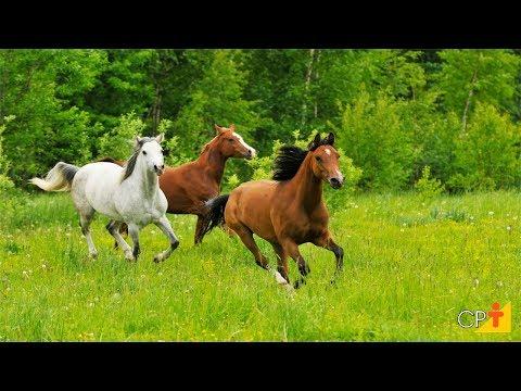 Curso Como Comprar Cavalos CPT