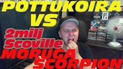 Pottukoira vs moruga scorpion 2miljoonaa scovillee
