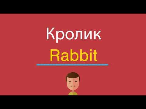 Как кролик по английски