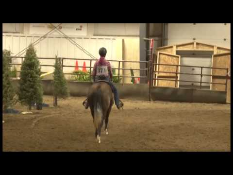 Futurity Open Pleasure Ride Sparkle Lena