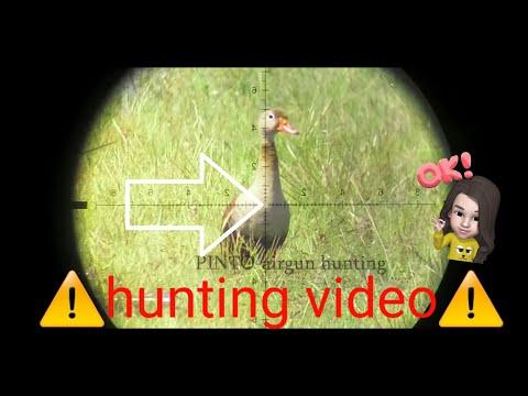 duck hunting air rifle  #3