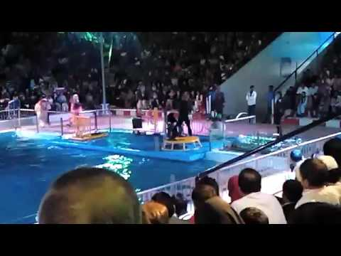 Dolphin show at Pakistan Maritime Museum In Karachi Part 1