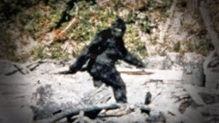 5 Mysterious Bigfoot Sightings that may be REAL