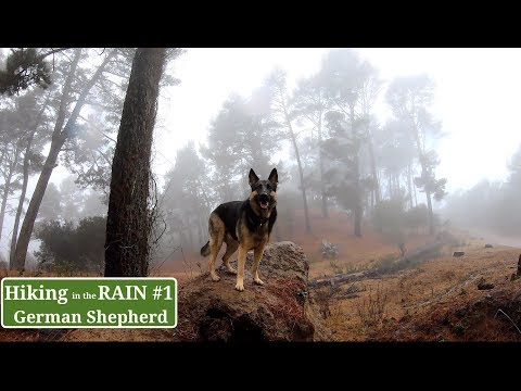 Dog Hiking in the Rain Hiking with German Shepherd Series Part 1 of 4 Hiking with Dog
