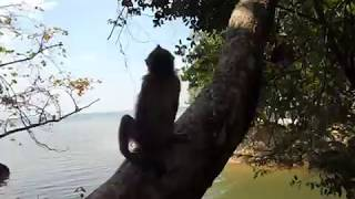 2, Тайланд, обезьяны, пляж, провинция Краби