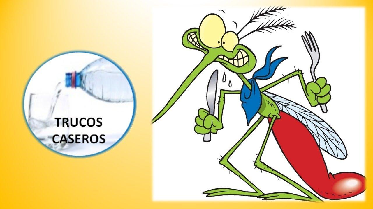 Los mejores trucos y consejos caseros para que los mosquitos no ...