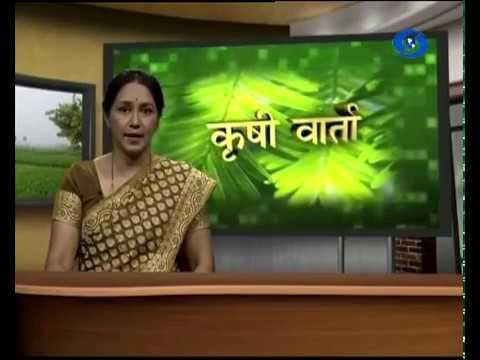 Krishivarta Bajarbhav - 05 June 2018 - कृषीवार्ता बाजारभाव
