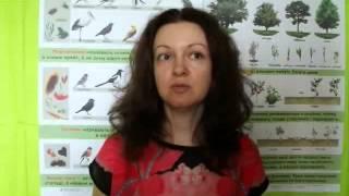 видео Гдз природоведение 2 класс грущинська
