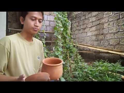 cara menghilangkan jerawat khasiat manfaat daun binahong untuk jerawat d...