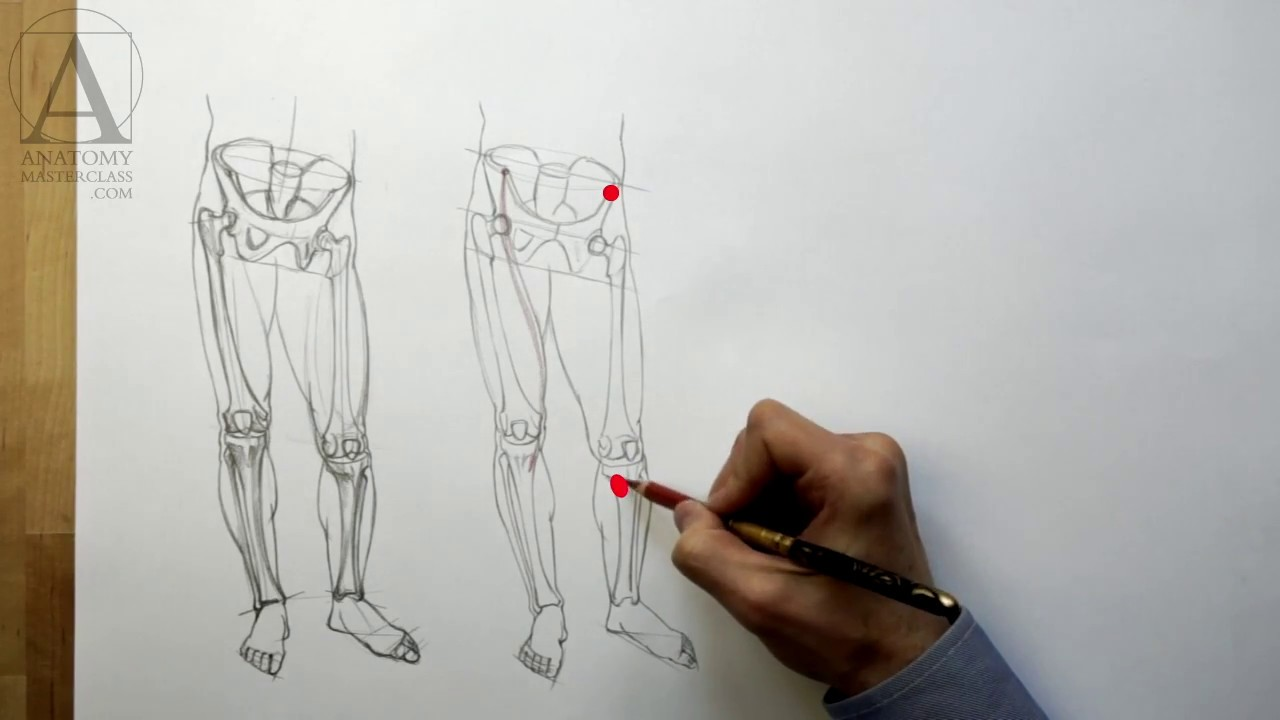 Anatomy of the Leg - Anatomy Lesson for Artists - YouTube