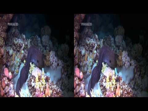 3D Demo   Nature   3D Side by Side...