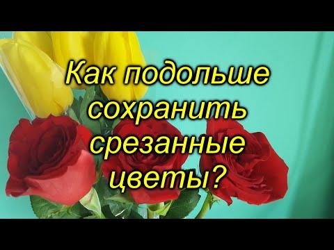Вопрос: При какой температуре и влажности необходимо хранить цветы для продажи?
