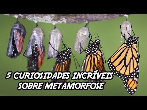 5 Curiosidades Incríveis sobre Metamorfose