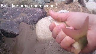 Balık kurtarma operasyonu, Elle balık böyle yakalanır:)