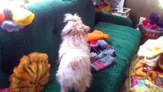 видео 2014 02 04  алиса смотрит в окно