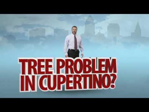 Tree Services in Cupertino, CA