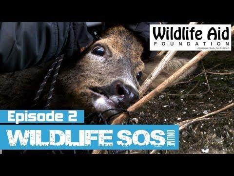 Wildlife SOS Online  Episode 2