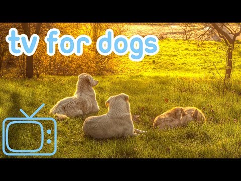 Dog TV! Boredom Blasting TV for Your Dog to Enjoy!