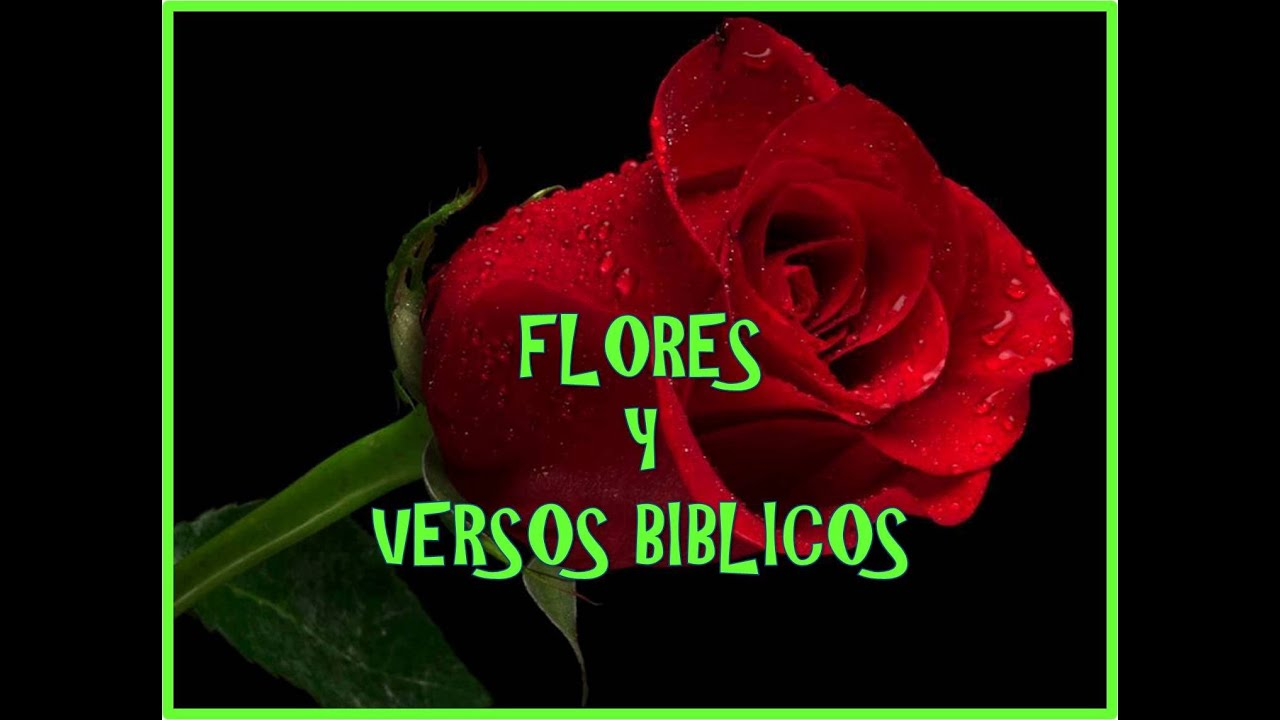 FLORES Y VERSOS BIBLICOS YouTube