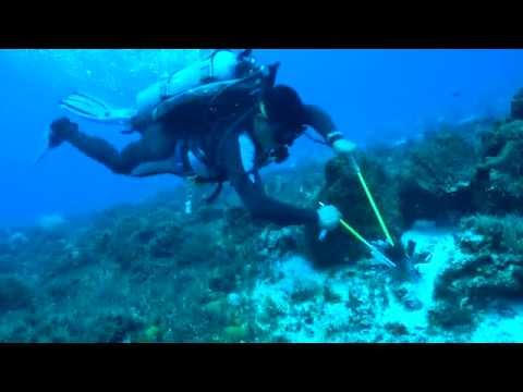 Pedro Pablo hunts and kills an invasive Lionfish.