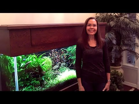 Dawn's 110-gallon Planted Aquarium