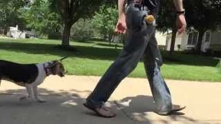 Dog's First Day Of Training | Matt Hendricks - Follow The Leader Dog Training And Rehabilitation Llc