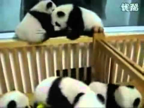 Panda gang war......what a splatter film!