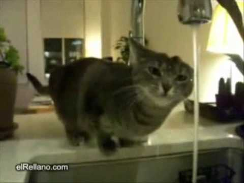 Funny cat drinking water from tap - YouTube