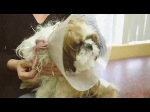 Orangethorpe Animal Aid Hospital